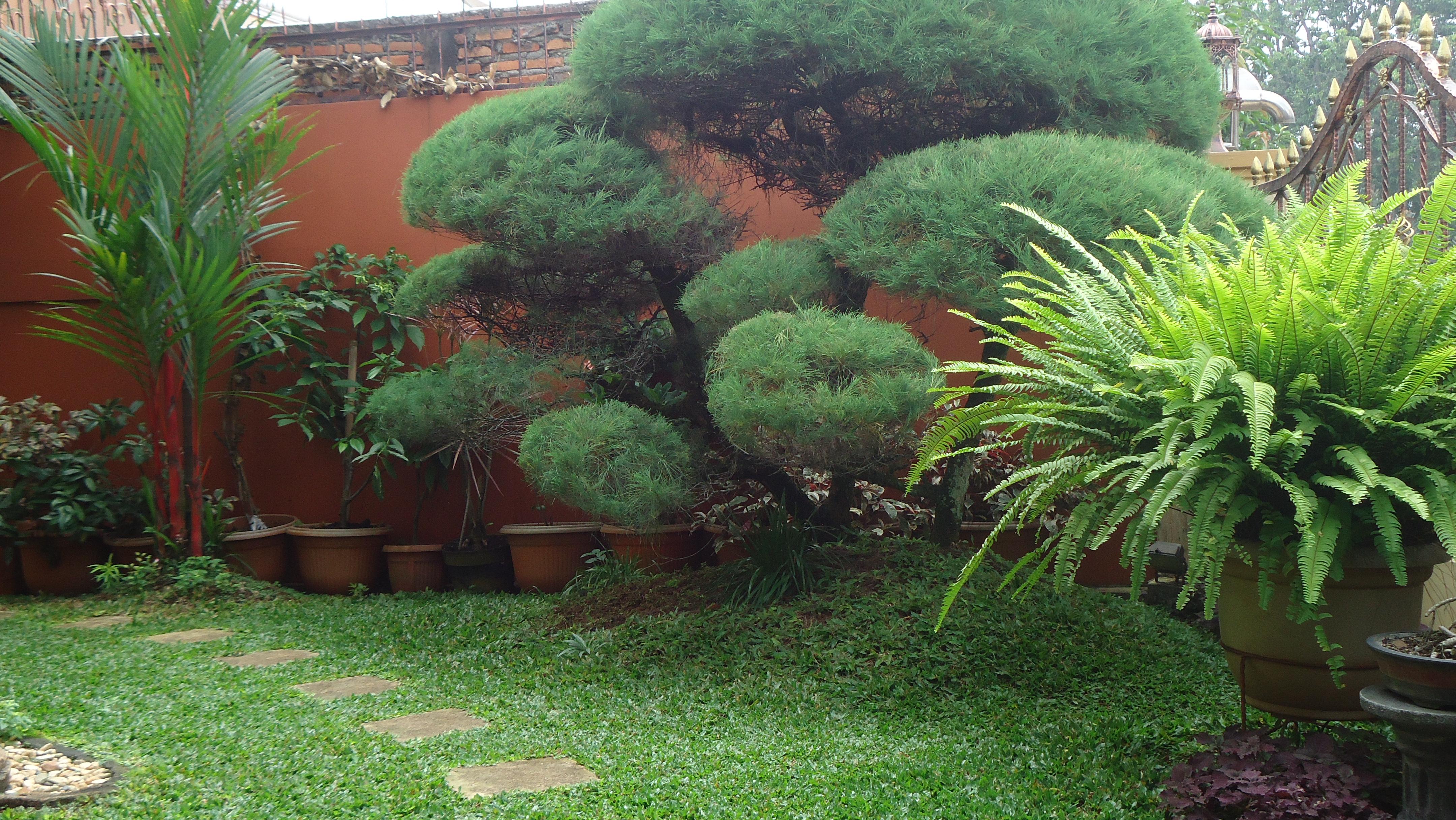 53 indahnya taman rumah membuat betah di rumah udara