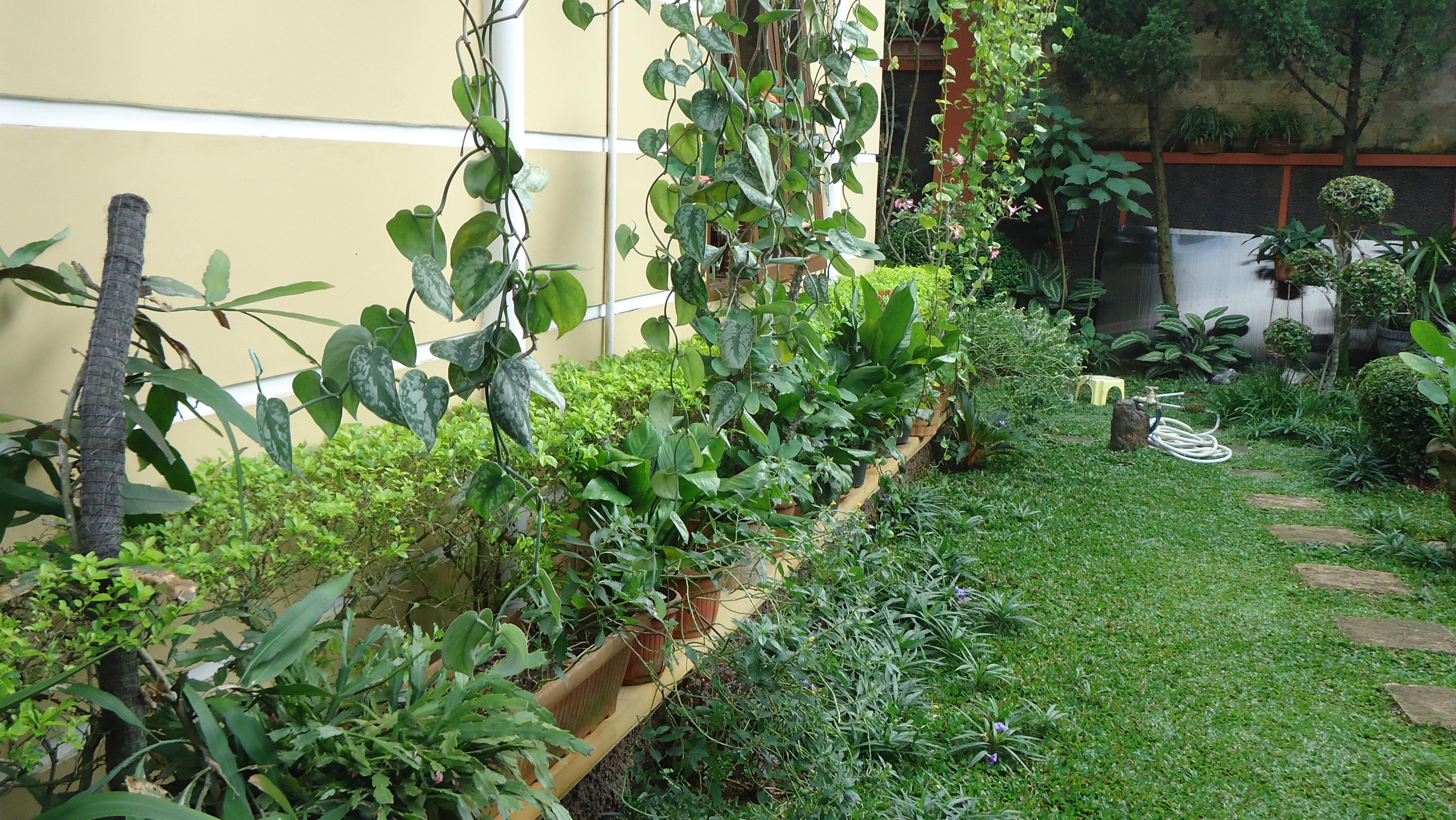 53 Indahnya Taman Rumah Membuat Betah Di Rumah Udara Segar