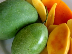 mengenal tanaman mangga, kandungan mangga, manfaat mangga, khasiat mangga - geraihijauonline.com